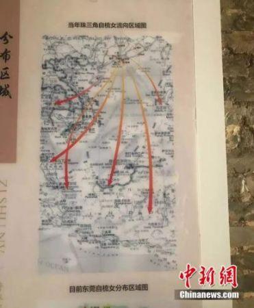 当年珠三角自梳女分布区域图。李映民 摄