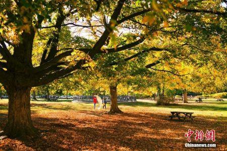 当地时间10月17日,美国纽约州克罗顿峡谷公园秋色正浓,民众在公园中进行休闲活动。中新社记者 廖攀 摄