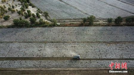 新疆生产建设兵团第二师31团9连农户在机采新棉。确·胡热 摄