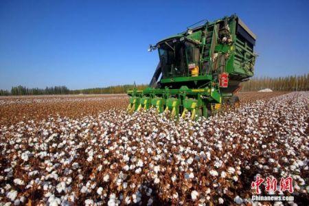资料图:采棉机正在抢收新棉。汪铁锁 摄